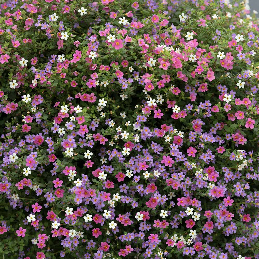 Garden Plants & Bushes