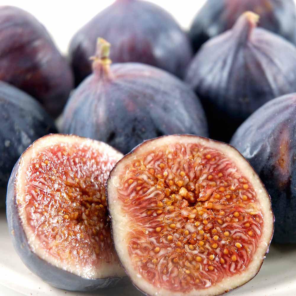 Fig Plant - Brown Turkey