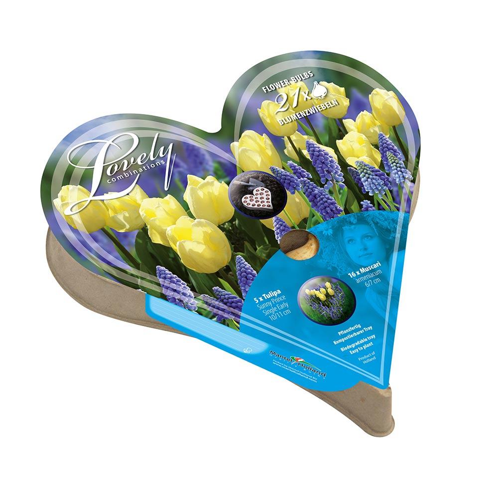 Plant-O-Tray Heart Preplanted Bulbs - Tulip and Muscari