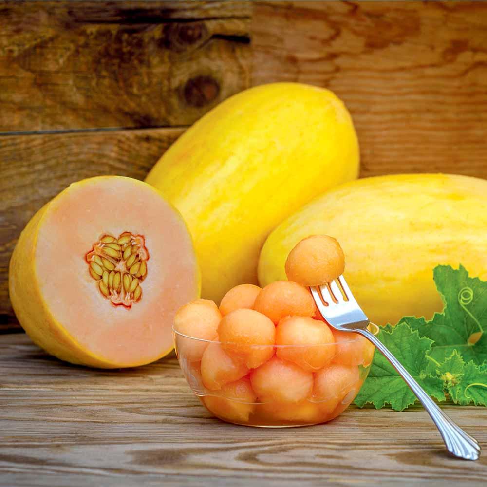 Melon Plants - Mangomel