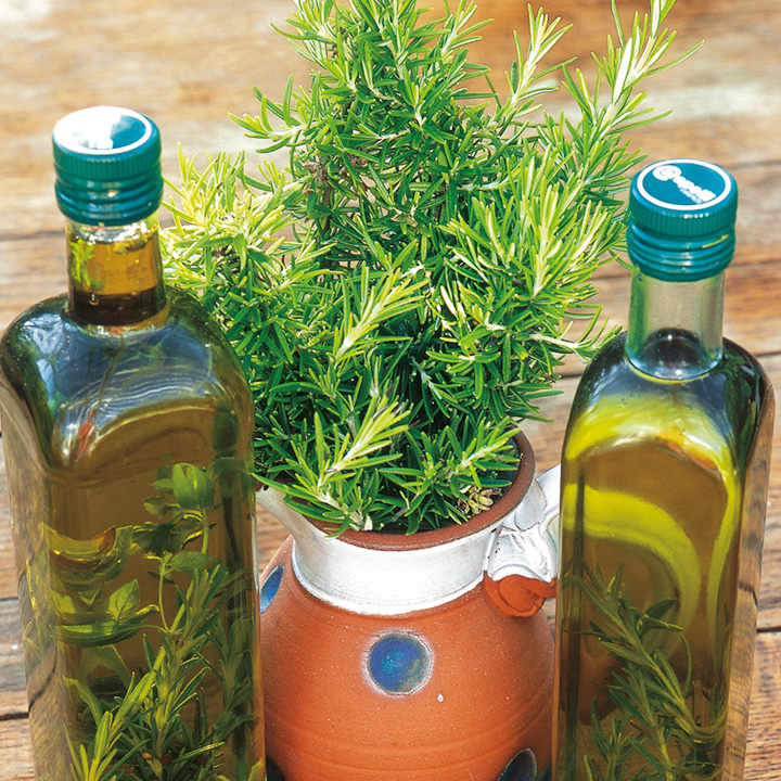 Herb Seed - Rosemary