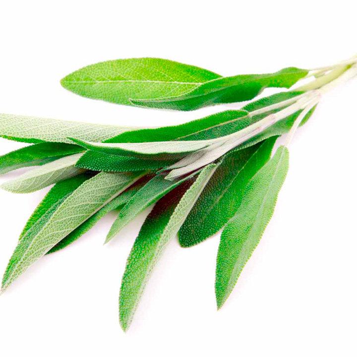 Sage Herb Seeds